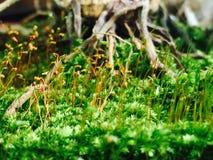 Mi pequeño jardín Fotografía de archivo