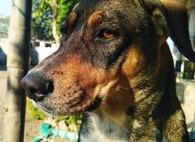Mi perro imágenes de archivo libres de regalías