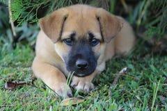 Mi perro 016 Fotografía de archivo libre de regalías