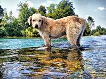 Mi perro Foto de archivo libre de regalías