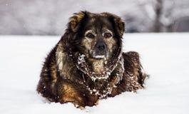 Mi perro Imagen de archivo