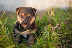 Mi perro 016 Fotos de archivo libres de regalías