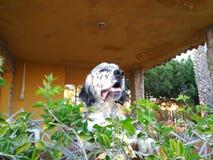 Mi perro Imagenes de archivo