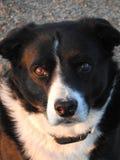 Mi perro callejero Foto de archivo