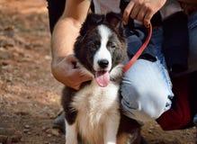 Mi perro de perrito es muy lindo Fotos de archivo