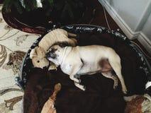 ¡Mi perro de reclinación del barro amasado! imagen de archivo