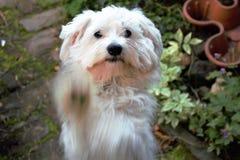 Mi perro dice hola al mundo Fotografía de archivo