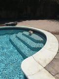 Mi perro en la piscina Fotografía de archivo libre de regalías