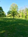 Mi perro Jackson Prays en la base del árbol de la vida Fotos de archivo