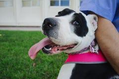 Mi perro Lala es feliz Fotos de archivo libres de regalías