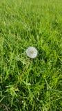 Mi planta del deseo imagen de archivo