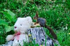 Miś pluszowy i wiewiórka Zdjęcie Stock
