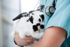 Mi section de docteur vétérinaire masculin Carrying A image stock