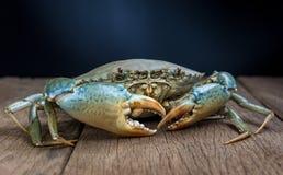 Mięsny krab Zdjęcie Stock