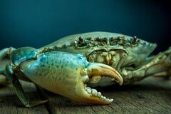 Mięsny krab Fotografia Stock