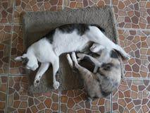 Mi sueño de los gatos Fotos de archivo