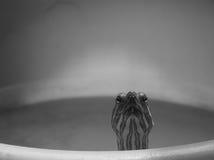 Mi tortuga del animal doméstico Imagen de archivo libre de regalías