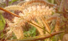 Miły kwiat Fotografia Stock