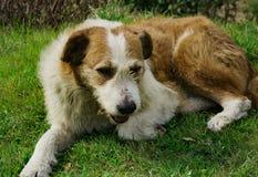 miły pies Zdjęcia Stock