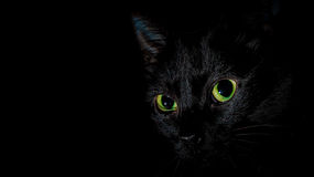 Mia - die schwarze Katze Stockfotografie