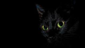 Mia - o gato preto Fotografia de Stock