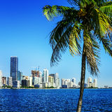 Miami śródmieścia linia horyzontu obraz stock