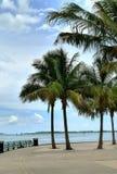 Miami stockfoto