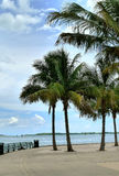 Miami foto de stock