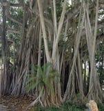Miami Royalty-vrije Stock Afbeelding