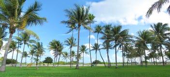 Miami Beach Royaltyfri Foto