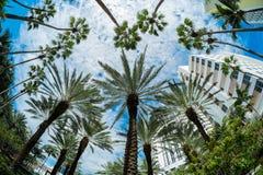 Miami Beach Arkivfoton