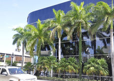 Miami Beach august 9th: Vintergröna palmträd i Miami Beach från Florida USA Arkivbilder