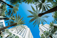 Miami Beach. Beautiful Miami Beach fish eye cityscape with palm trees and art deco architecture Stock Photos