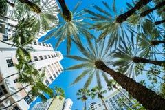 Miami Beach. Beautiful Miami Beach fish eye cityscape with palm trees and art deco architecture Royalty Free Stock Photo