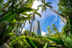 Miami Beach. Beautiful Miami Beach fish eye cityscape with palm trees and lush foliage Stock Image