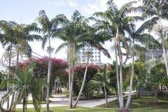 Miami Beach FL, el 9 de agosto: Parque Miami Beach céntrico del paisaje sonoro en la Florida los E.E.U.U. Foto de archivo libre de regalías