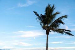 Miami Beach /FL, USA sikt av stranden från den södra Pointe pir royaltyfri bild