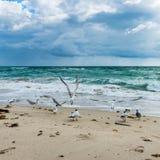 Birds. Miami Beach. Florida. royalty free stock images