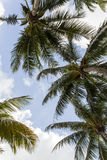 Miami Beach Florida Royalty Free Stock Photos