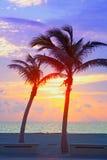 Miami Beach, Florida färgrik sommarsoluppgång eller solnedgång med palmträd Arkivbilder