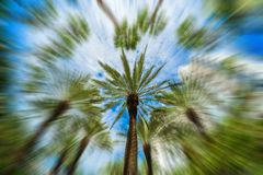 Miami Beach Palm Tree Blur. Beautiful Miami Beach fish eye cityscape with palm trees and art deco architecture with a radial blur effect royalty free stock photos