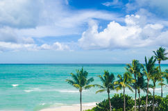 Miami Beach Palms Royalty Free Stock Images