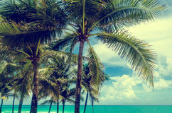 Miami Beach Palms Royalty Free Stock Photography