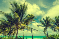 Miami Beach Palms - Retro effect Royalty Free Stock Images