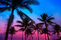 Miami Beach-Südstrandsonnenuntergang-Palmen Florida Stockfoto
