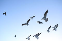 Miami beach seagulls Royalty Free Stock Photo