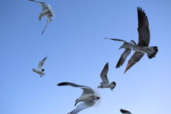 Miami beach seagulls Stock Image