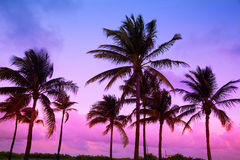 Miami Beach South Beach sunset palm trees Florida Stock Photography