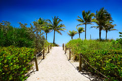 Miami beach and tropical sea in Florida Stock Image