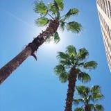 Miami céntrica que camina y goce de las palmeras imagen de archivo